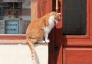 Данте — литературный кот Вроцлава
